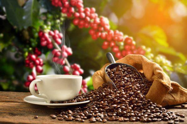 Còn những bí ẩn nào về hạt cà phê mà bạn chưa biết?